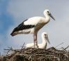 Союз охраны птиц России приглашает к участию в международном образовательном интернет- проекте Весна идет!