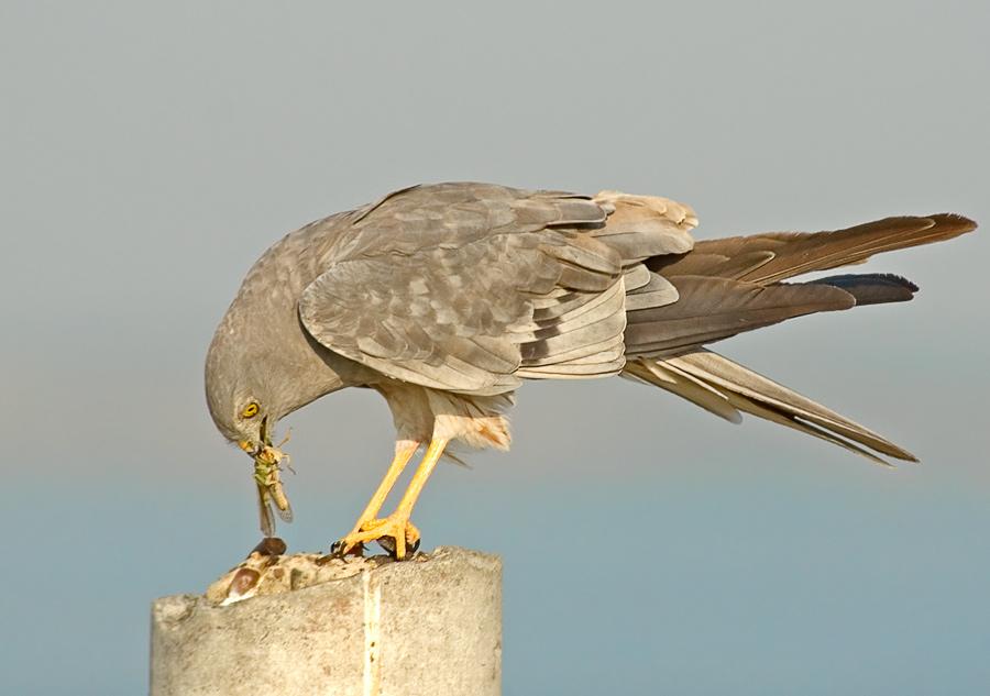 какие опыты проводятся на птицах: