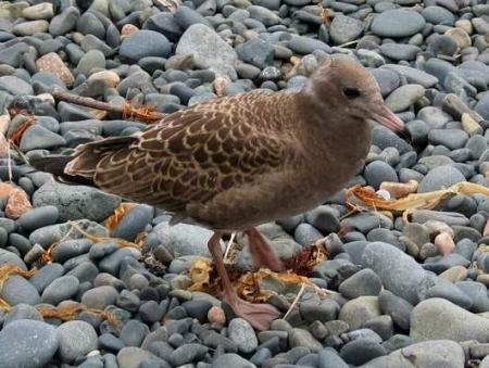 Чем кормить чайки в домашних условиях 865