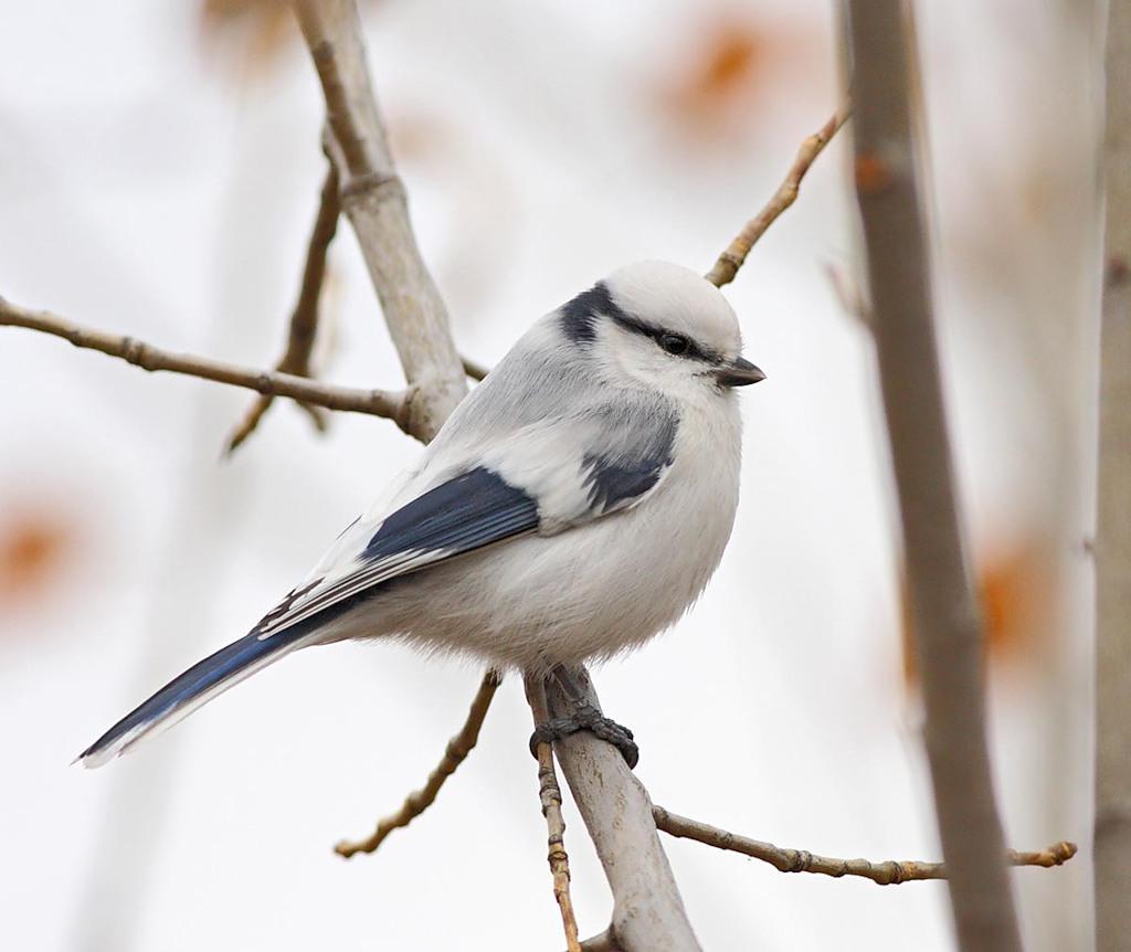 Маленькая пестрая птичка вологодская область