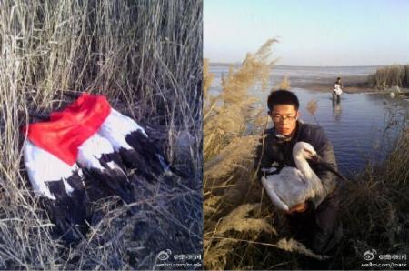 Массовая гибель Дальневосточных аистов в Китае