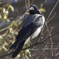 Презентация Для Дошкольников Зимующие И Перелетные Птицы